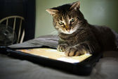 Cat and tablet — Stock Photo