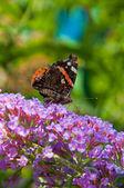 Farfalla — Foto Stock