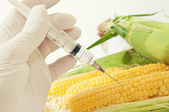 Tatlı mısır, genetik mühendisliği — Stok fotoğraf