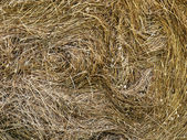 Fresh mown hay background detail — Stock Photo
