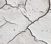 Drought - dry river bed detail — Stock Photo