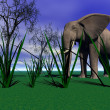 Elephant - 