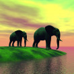 Elephants — Stock Photo