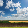 Cultivated land — Stock Photo #11453322