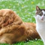 Like cat and dog — Stock Photo
