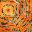 Stock Photo: Skin of persimmon