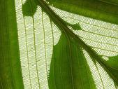 Net on leaf — Stock Photo