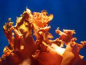 яркие водных растений — Стоковое фото