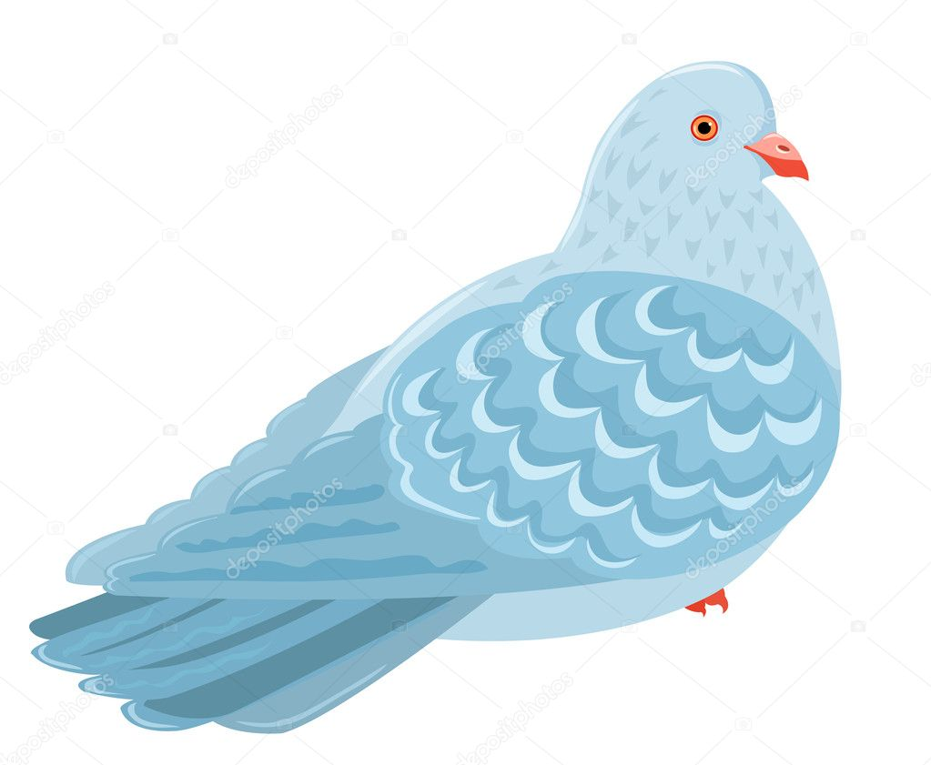 Sitting pigeon. Isolated on white. Cartoon vector illustration. — Stock Vector #10771960