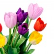 Spring Tulip Flowers bunch - Stock Photo
