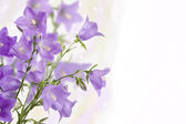 Bouquet of hand bells — Stock Photo