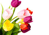 Tulipán de primavera flores montón — Foto de Stock