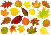 Folhas de outono — Foto Stock
