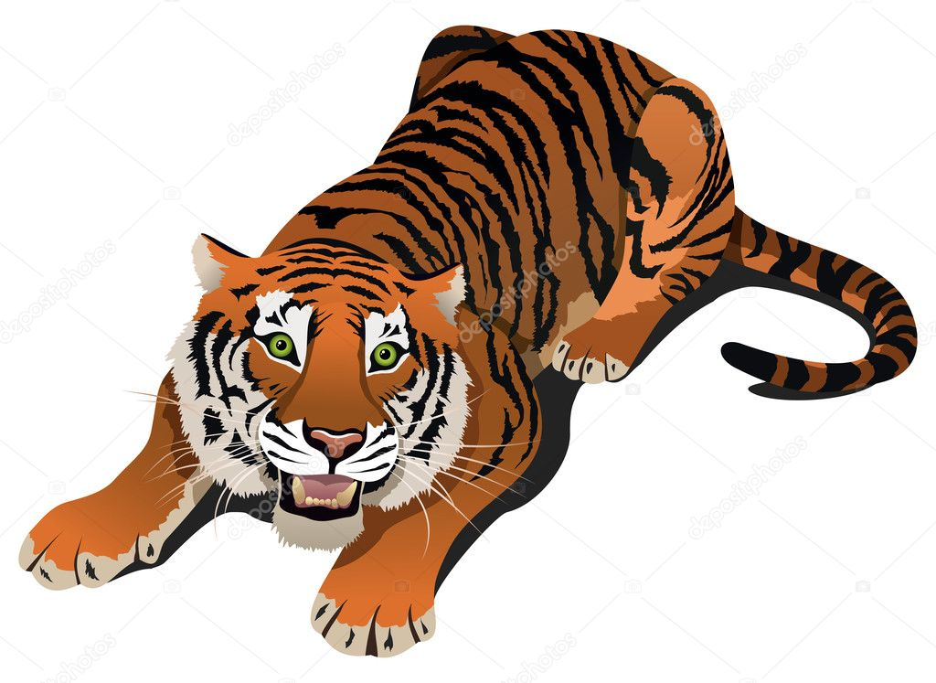 Roaring angry tiger, vector illustration — Image vectorielle #11118753