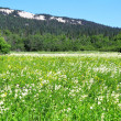 Alpine meadows — Stock Photo #11331348