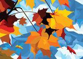 Autumn leaves maple — Stock Photo