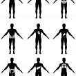 Human organs in body icons — Stock Vector #11259786