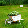 A wooden wheelbarrow — Stock Photo