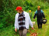 äldre par samla svamp — Stockfoto