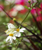 White butterfly and flower — Stock Photo