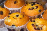 Decicious muffins with raisins — Stock Photo