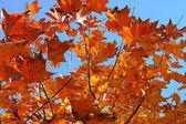 Autumn leaves — Foto de Stock