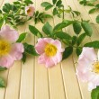 Wild rose flowers — Stock Photo