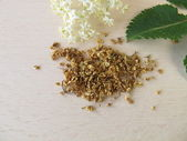 Elderflower, Sambuci flos — Stock Photo