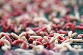 Details of maggots for fisherman — Stock Photo
