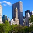 Central Park — Stock Photo #10983608