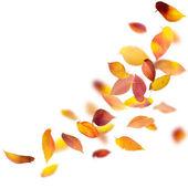 Caen hojas de otoño — Foto de Stock