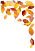 Falling Leaf Frame — Stock Photo