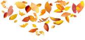 Colorful Autumn Leaves — Stock Photo