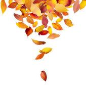 Bladeren die vallen van bovenaf — Stockfoto