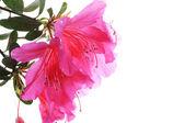 Flowers — Stockfoto