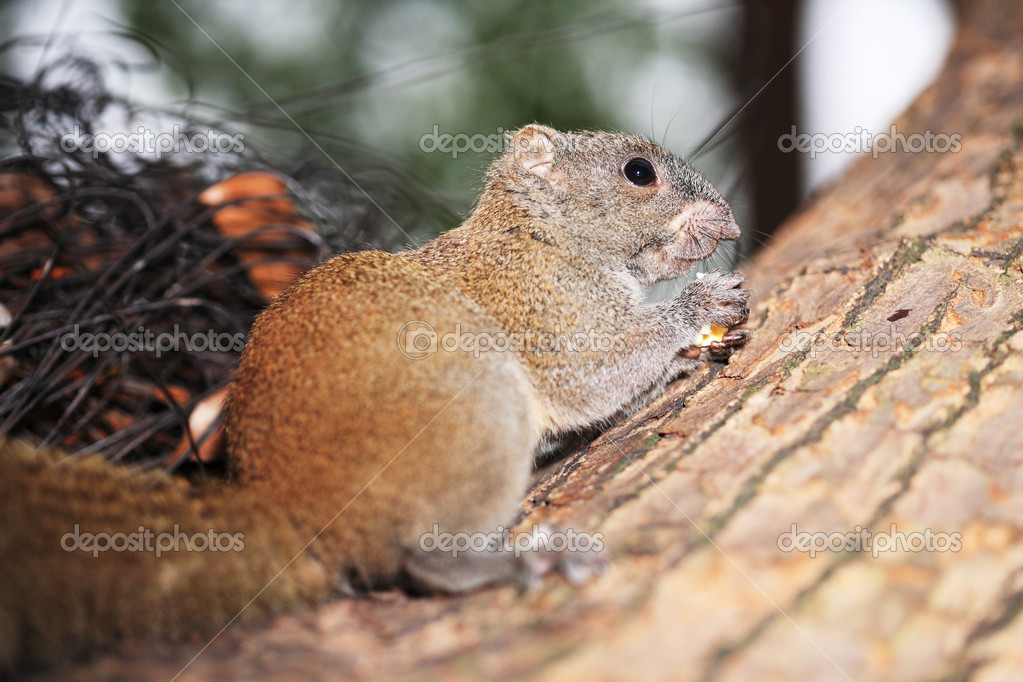 Little cute squirrel on tree branch — Stock Photo #10738458