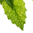Tree leaf - Stock Photo