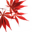 Maple leaf — Stock Photo #10742658