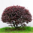Tree isolated against a white background - Stockfoto
