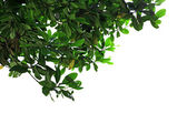 美しい緑の葉 — ストック写真