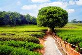 Road and tree — Foto de Stock