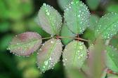 Green leaf with dew — Стоковое фото