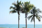 Palm vedle moře v číně sanya — Stock fotografie