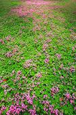 Small purple flowers — Stock Photo
