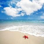Red starfish lying on the beach — Stock Photo