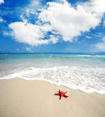 Red starfish lying on the beach — Stock Photo