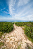 Mountain trail landscape — Stock Photo