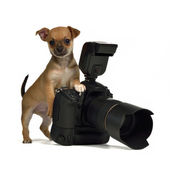 Chiuahua puppy with photo camera — Stock Photo