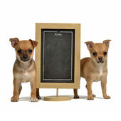Two puppiea with menu blackboard — Stockfoto