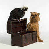 Old treasure chest with pirate bird and dog — Stock Photo